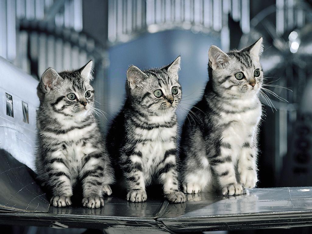 Les experts a las vegas prison break fond d 39 cran dakota fanning et ncis film fotos chat - Enlever les puces sur un chaton ...
